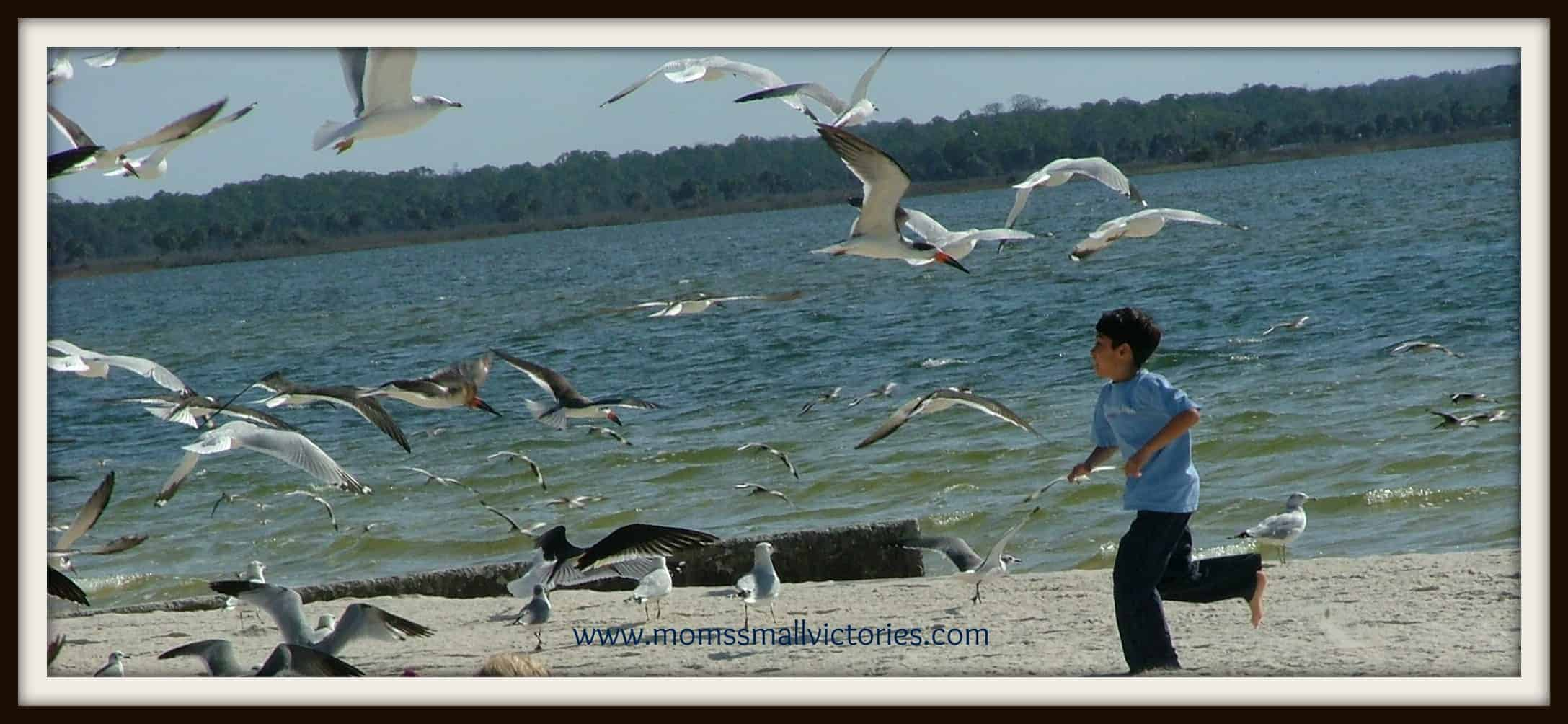 Wordless Wednesday – Chasing Seagulls