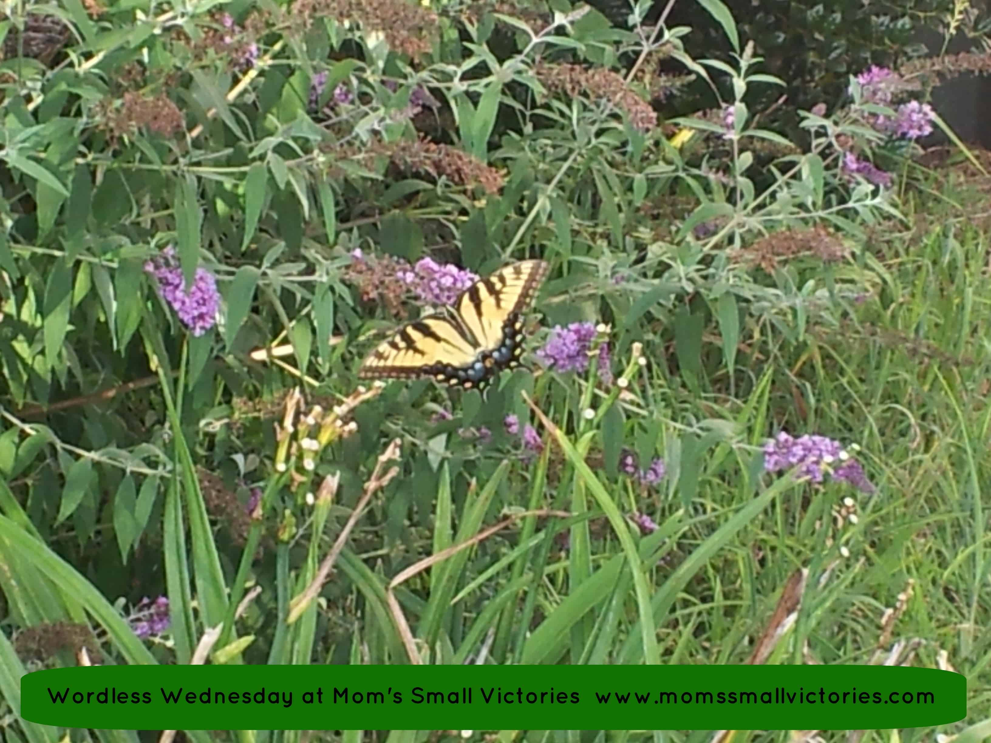 Wordless Wednesday: Beautiful Butterfly