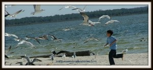 moms small victories-chasing seagulls