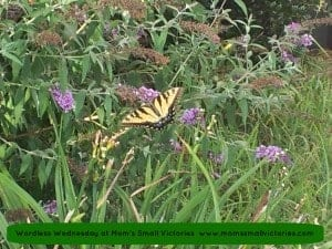 wordless wednesday butterfly 8-6-13