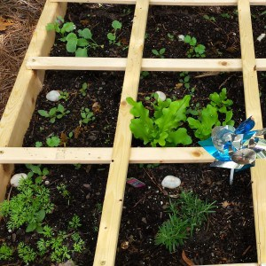 Square Foot Garden by Mom's Small Victories. Carrots, Rosemary, lettuce, basil, broccoli are happy in our square foot garden this spring.