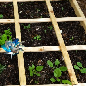Square Foot Garden by Mom's Small Victories. Spinach, squash, jalapeno, tomatillo are happy in our square foot garden this spring.